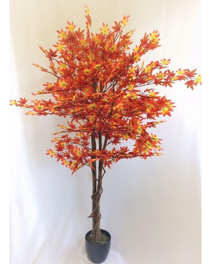 150cm AUTUMN  Maple Tree