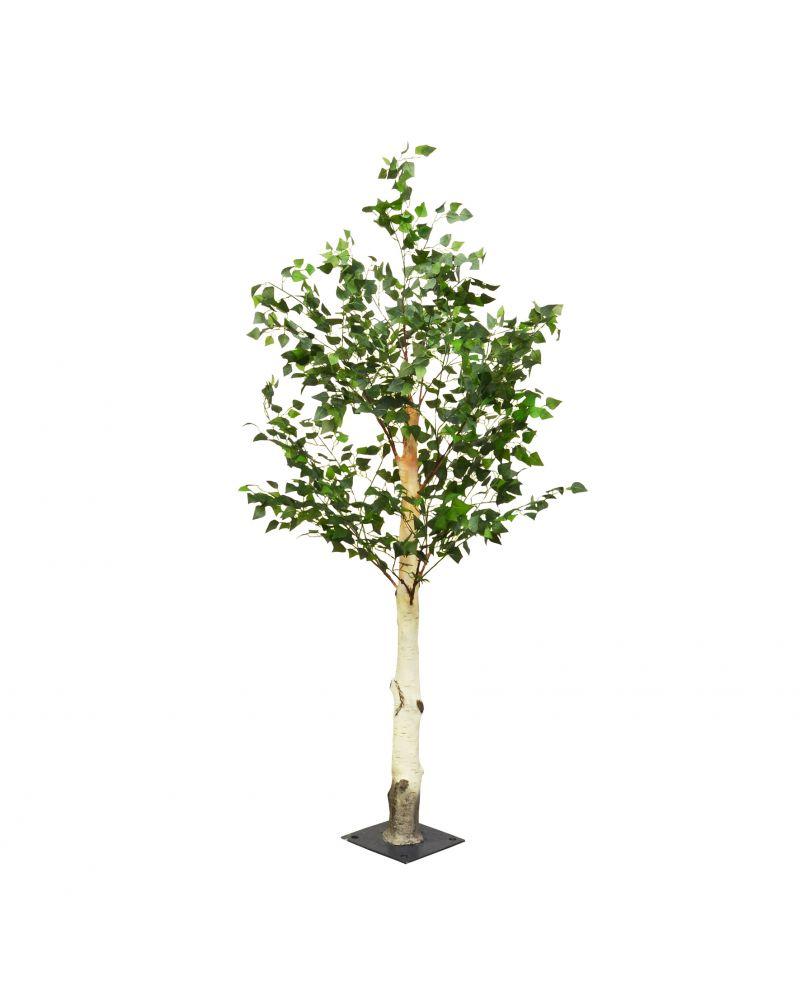 200cm Birch Tree