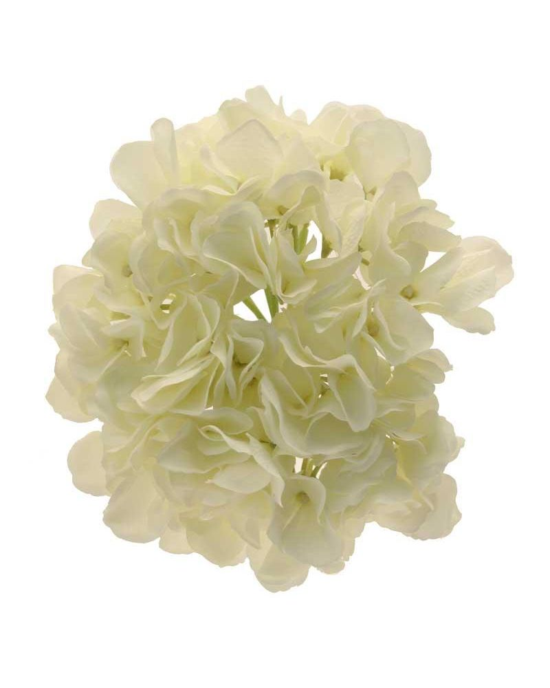 Short Stem single Hydrangea Cream